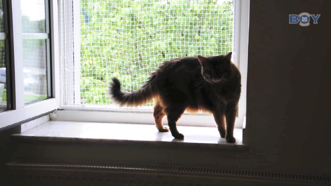 Boy Fenstersicherung mit Rahmen und Netz
